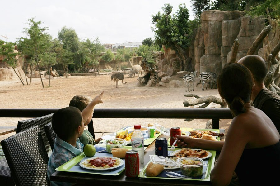 what to do in valencia? Go to Bioparc-Valencia